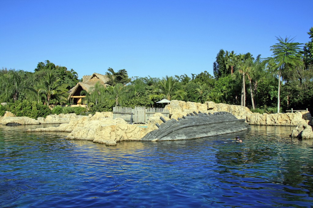 What's Waiting for You at Discovery Cove